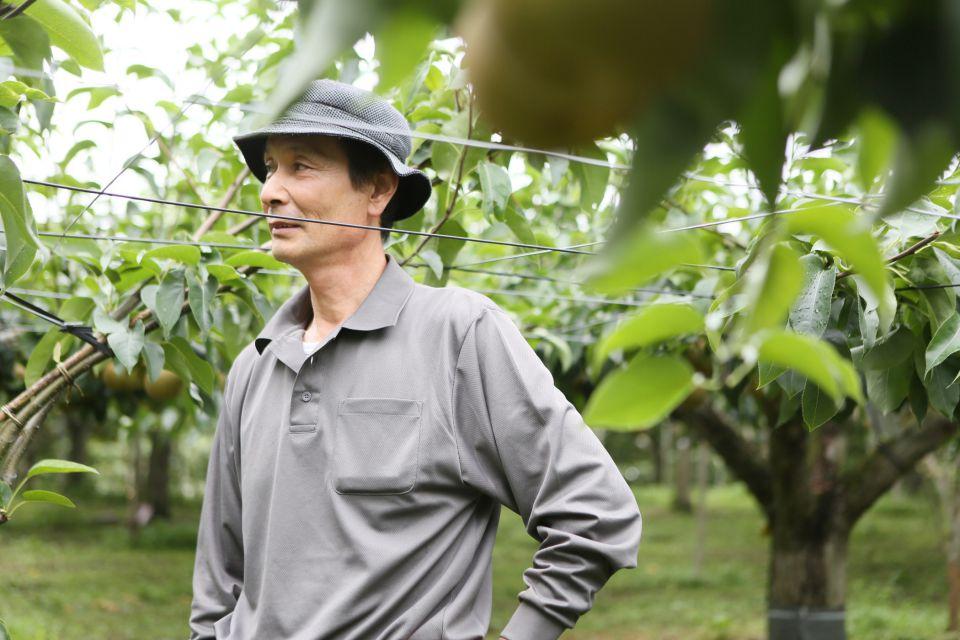 田中さんが立つと、梨の木の高さを超えてしまいます