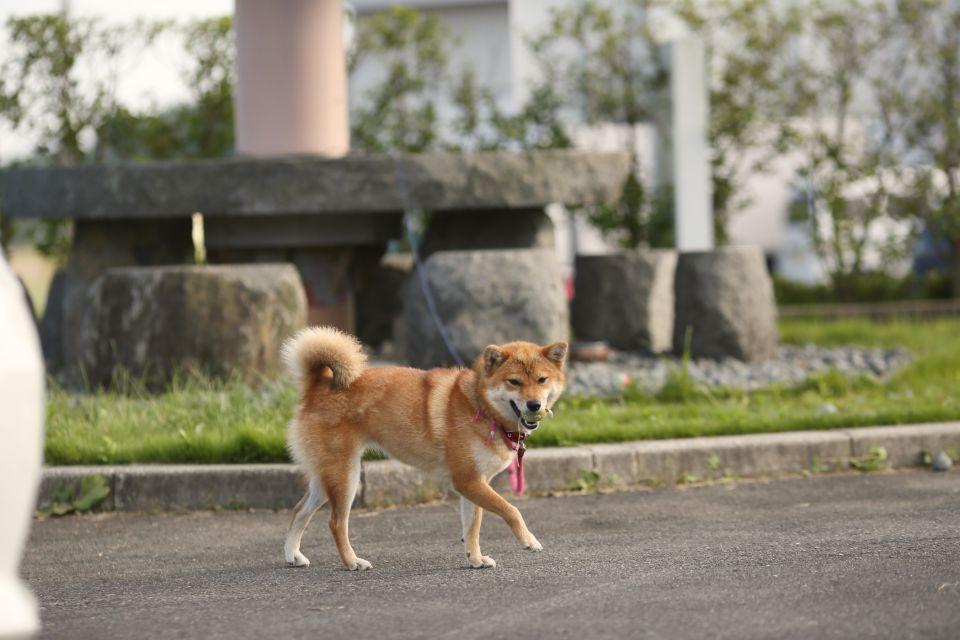 今野海産の看板犬・ハナくん