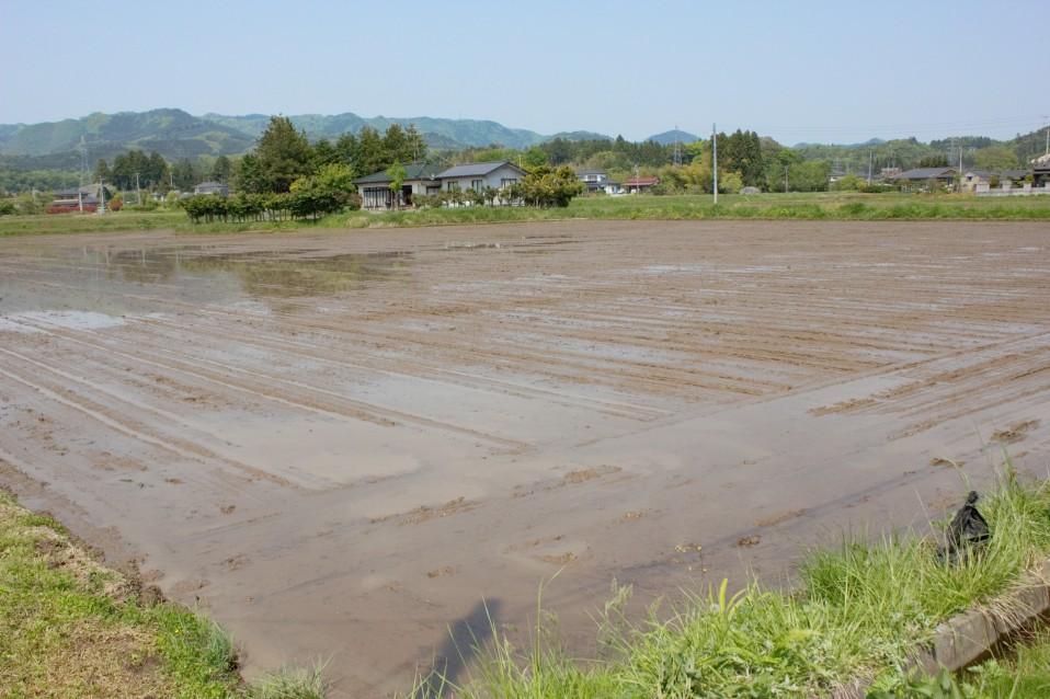 佐藤徹広さんの直播の田んぼ。田植えが終了した風景です。
