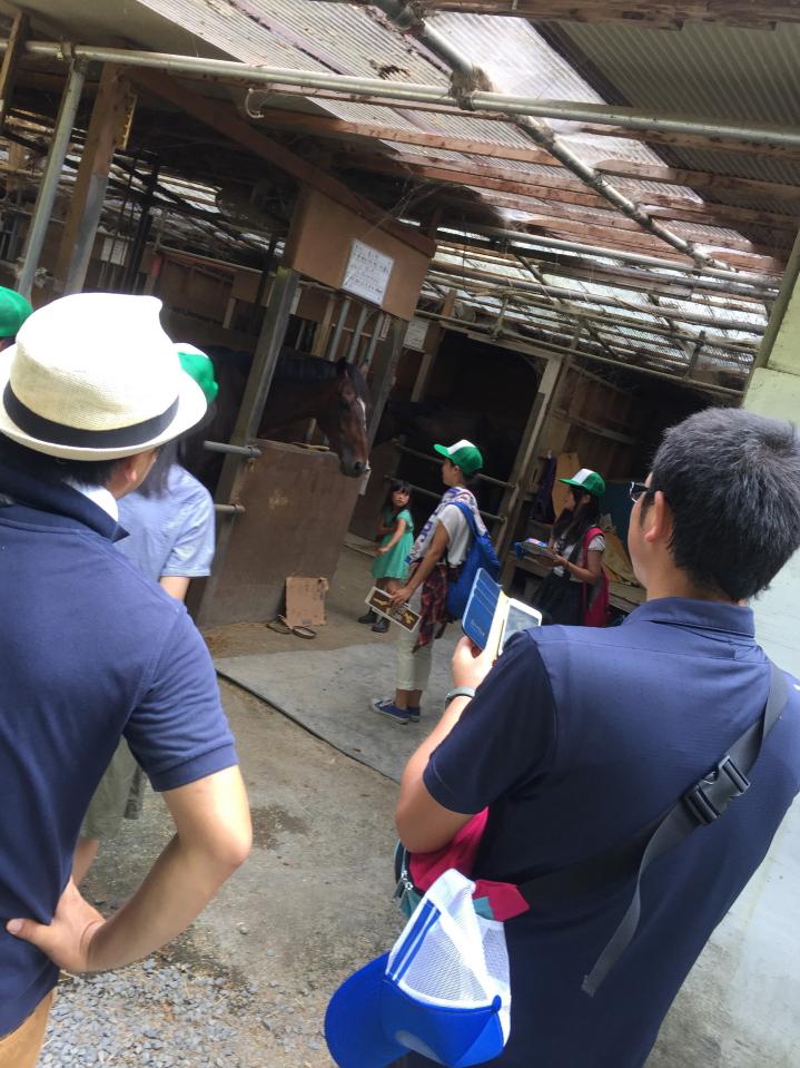 相馬市中村城址内で飼育されている馬