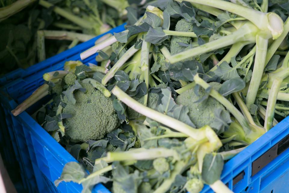 福島県相馬市にある大野村農園で育てられたブロッコリー