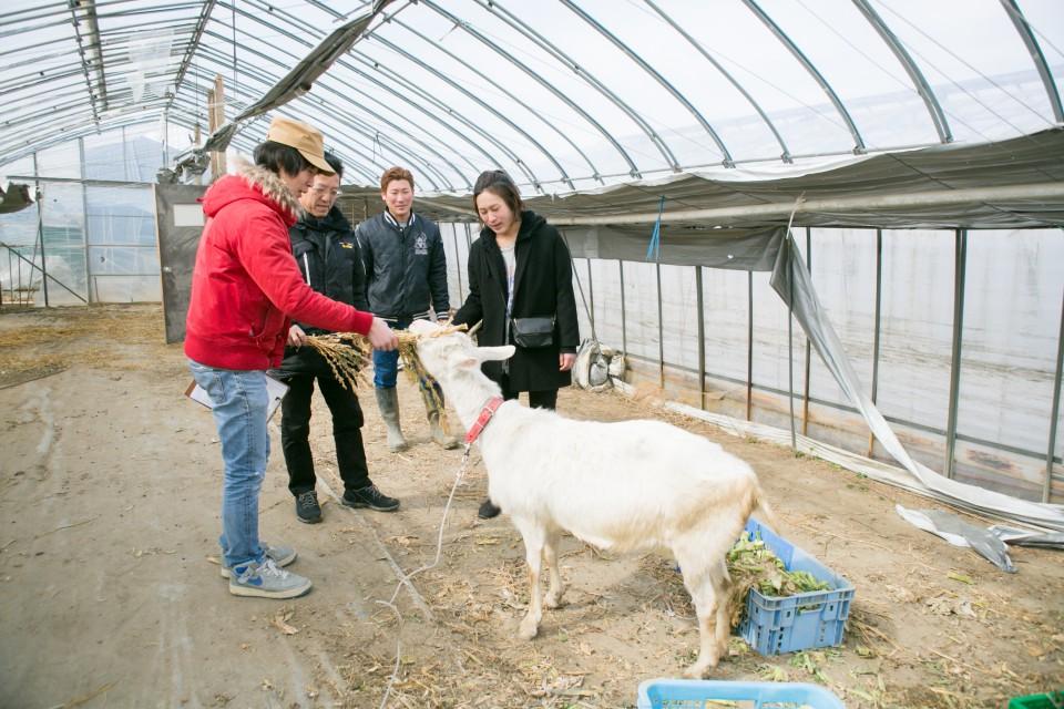 福島県相馬市にある大野村農園のヤギ