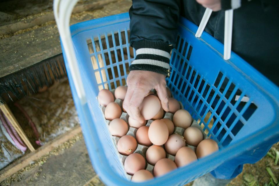 福島県相馬市にある大野村農園が手掛ける自然卵養鶏法によるブランド鶏卵「相馬ミルキーエッグ」の鶏舎